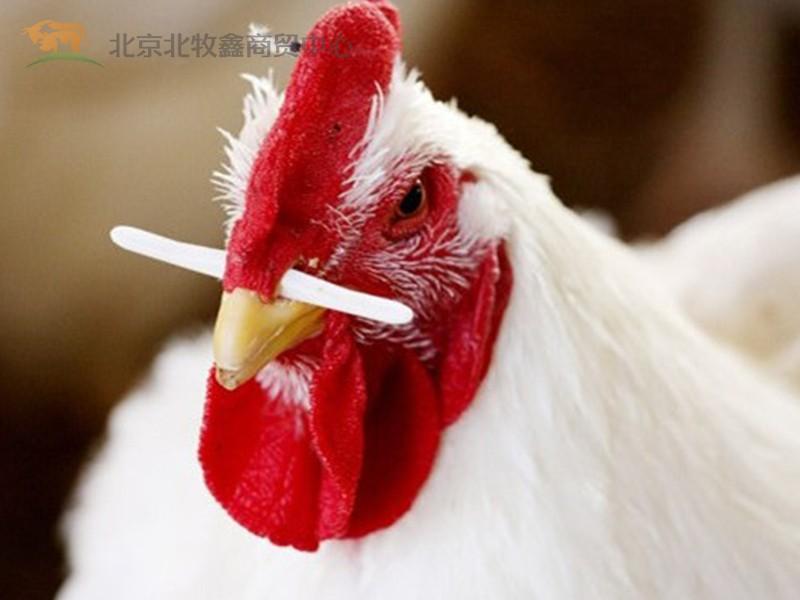 公鸡鼻签 鸡鼻签 原生料公鸡鼻签 防偷吃公鸡鼻签 公鸡鼻栓